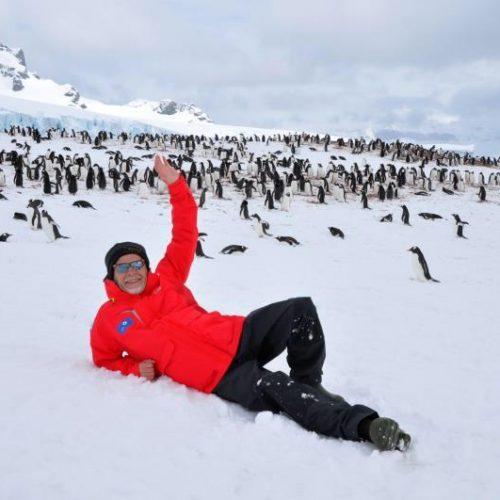 Arktika_pingviny